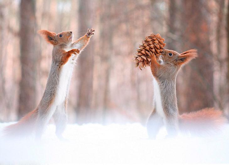 Ardillas peleando entre ellas