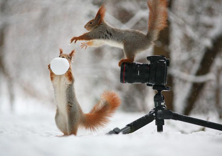 Ardillas jugando con una bola de nieve frente a una cámara