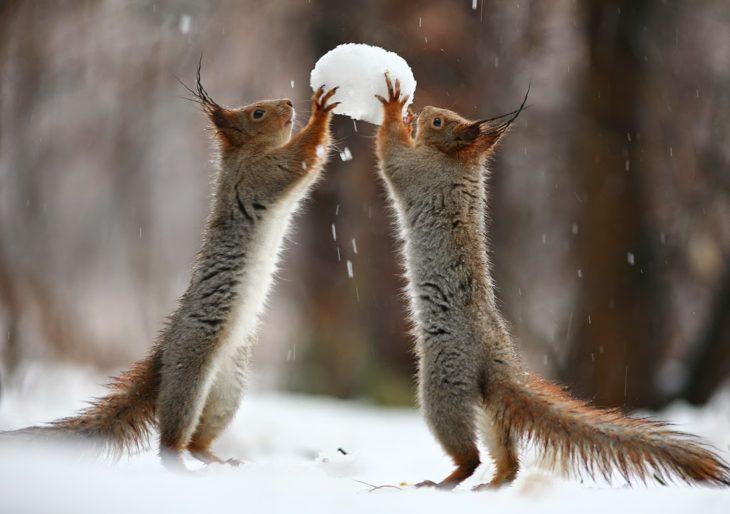 Ardillas peleando por una bola de nieve