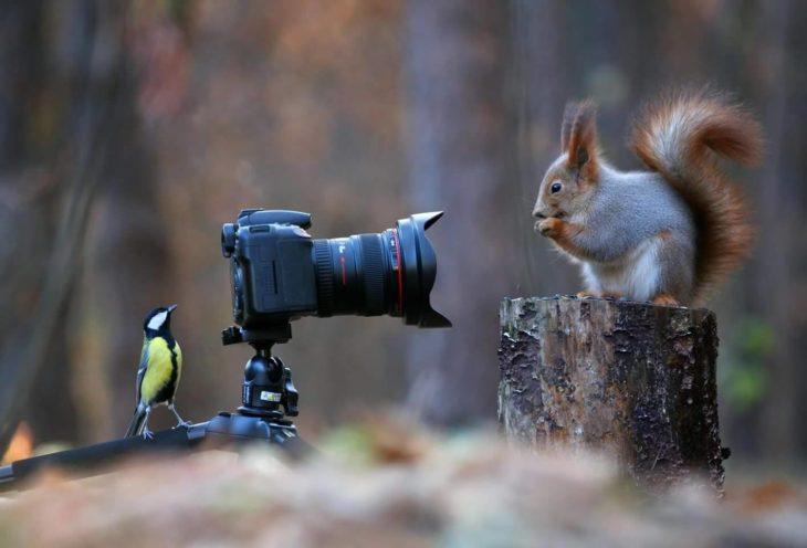 Un ave tomándole fotos a una ardilla
