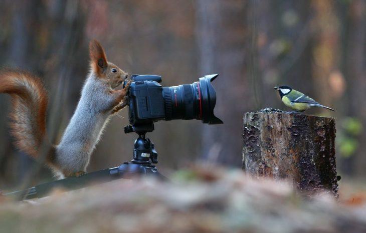 Ardilla tomándole fotos a un ave
