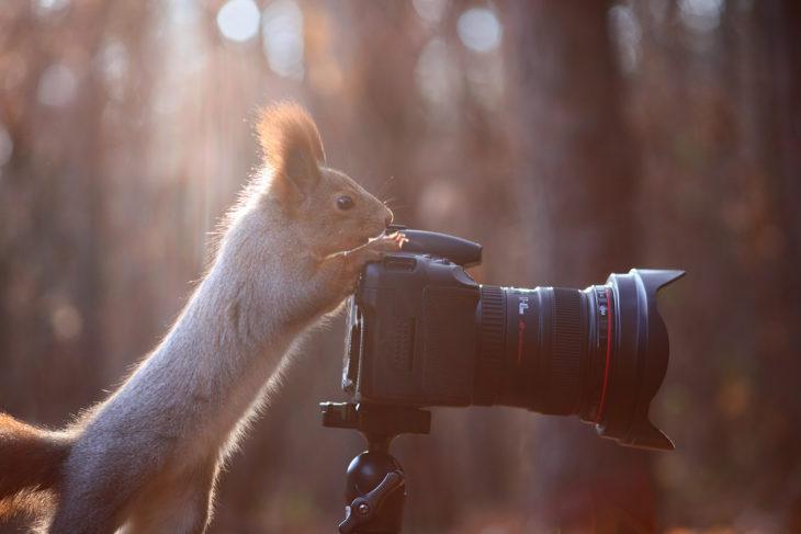 Ardilla tomando fotos