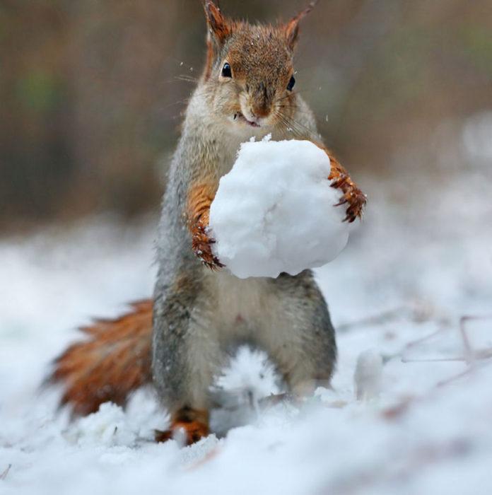 Ardilla con una bola de nieve