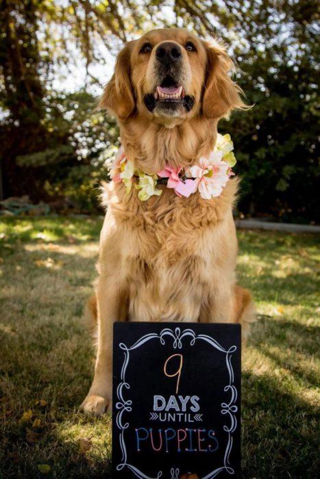 Orgullosa mamá canina