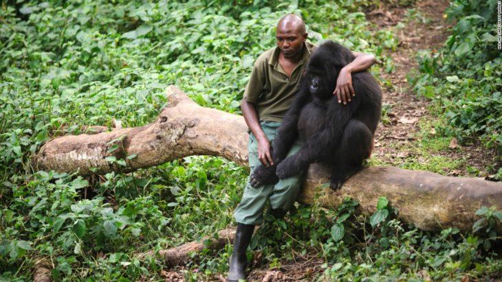 abrazo gorila