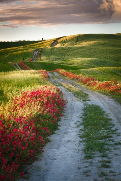 Camino en Toscana, Italia