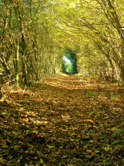 túnel de árboles en aldridge inglaterra