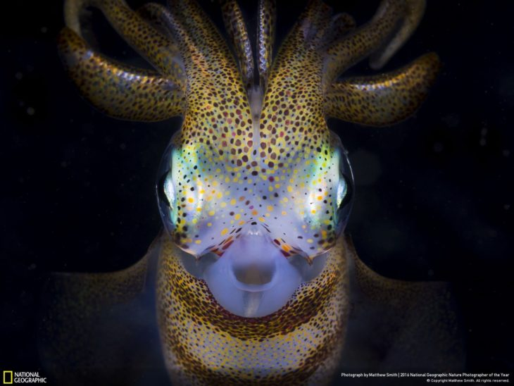 animal marino