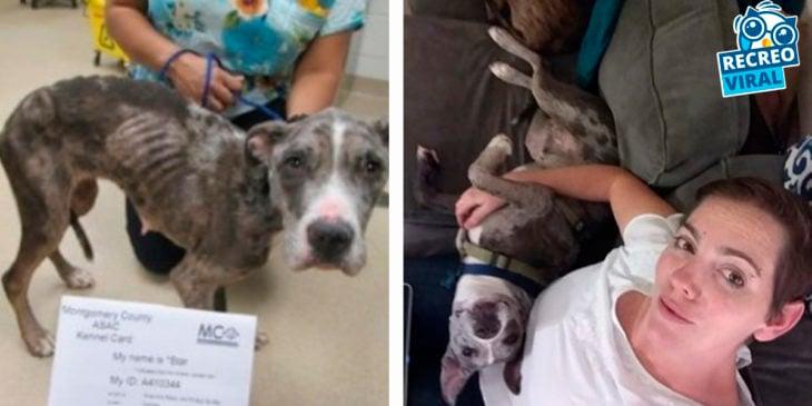 perro antes y después de ser rescatado con su dueña