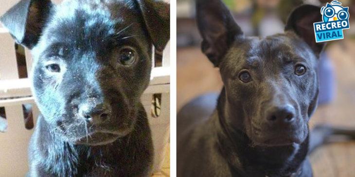 perrito escuro antes y después de ser rescatado