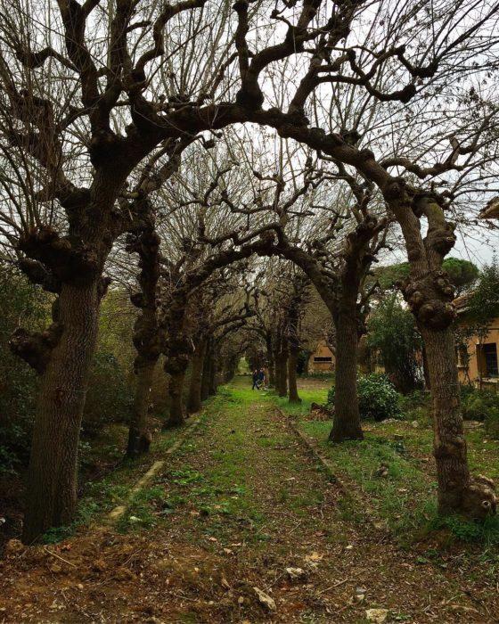 túnel de árboles de turquía