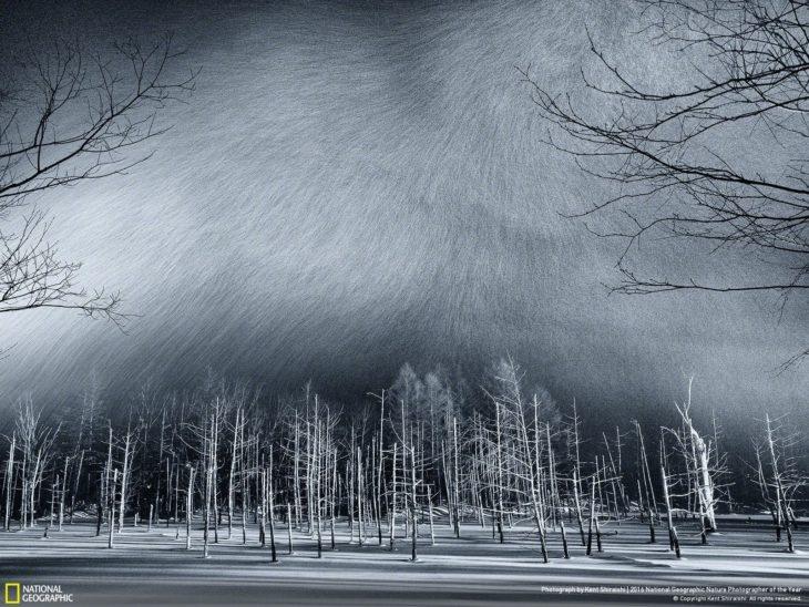 Estanque congelado con nieve