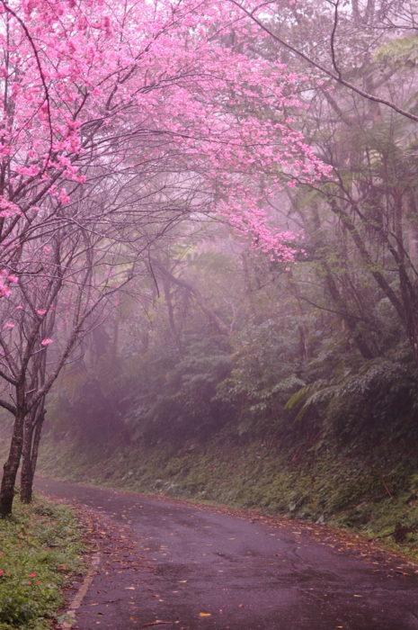 paisaje natural de kioto, japón