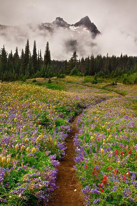 camino natural en el noroeste de estados unidos