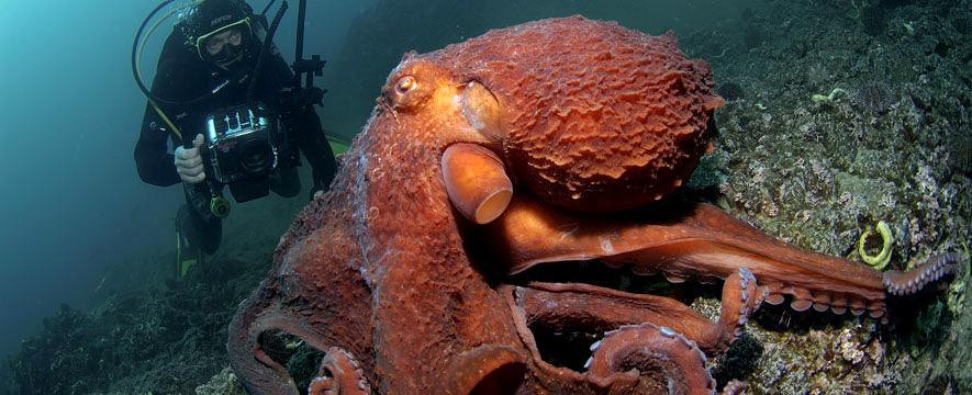 Algunos de los animales m s grandes que viven en el planeta for Se puede cocer el pulpo congelado