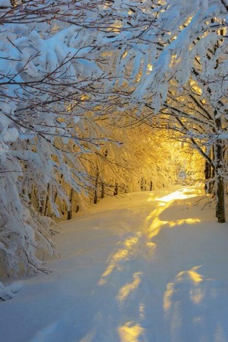 túnel de árboles nevados