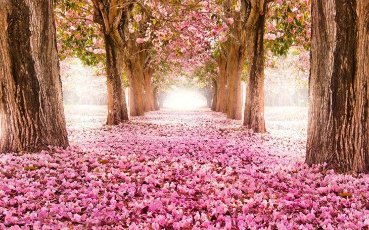 túnel de cerezos