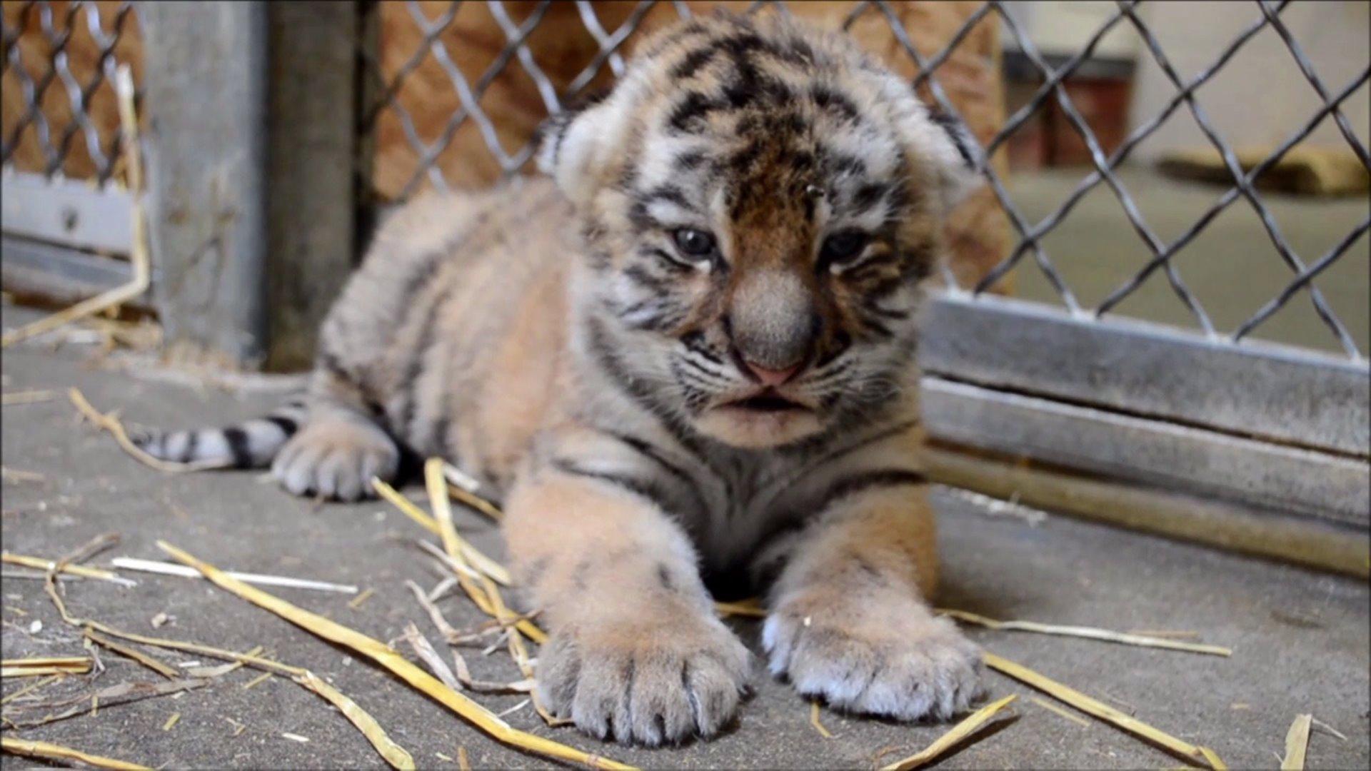 20 fotografías tiernas de animales salvajes recién nacidos