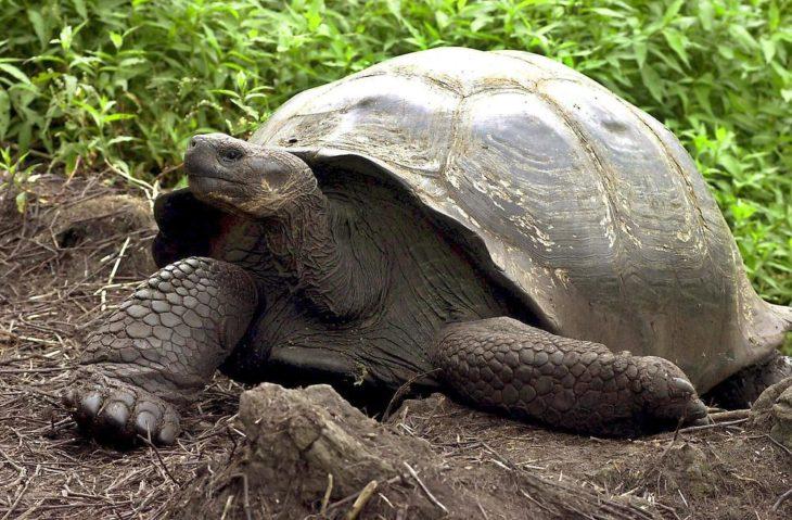 una tortuga caminando sobre la tierra