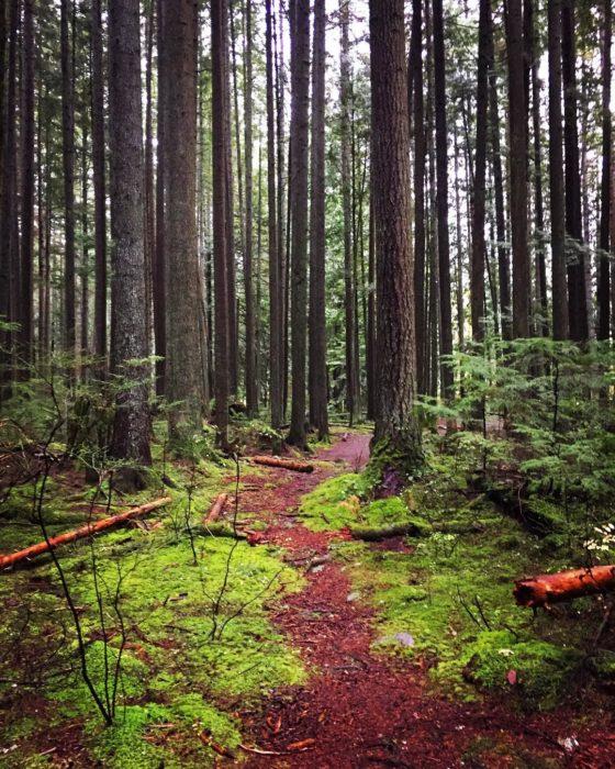 camino natural en vancuver canadá