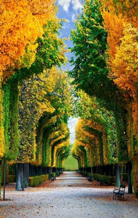 túnel de árboles en viena
