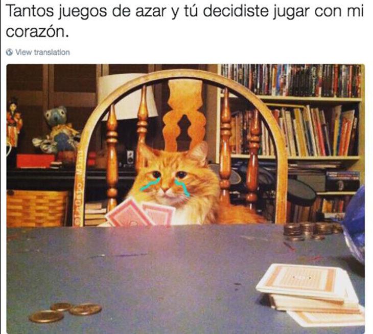 meme gato llorando en juegos de azar