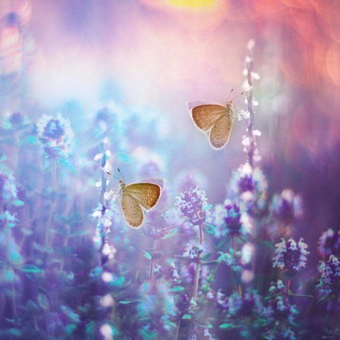 foto macro de mariposas