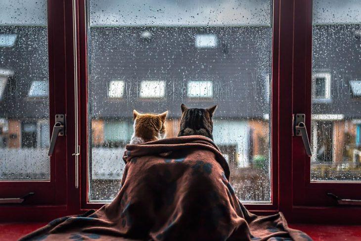 dos gatitos mirando una ventana