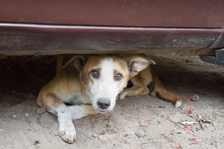 perro de la calle bajo un vehículo