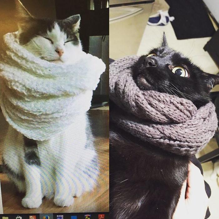 expectativa vs realidad tomar foto a gato con bufanda