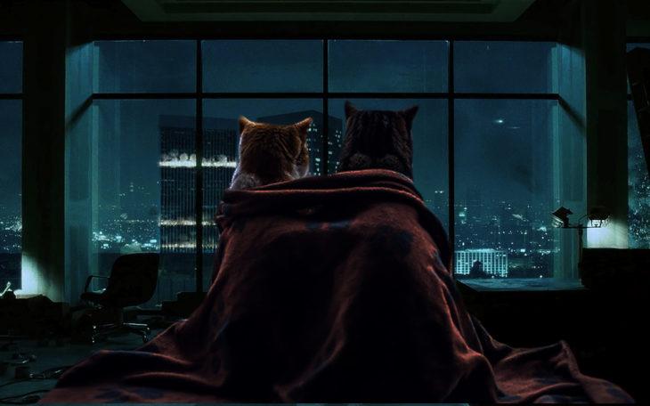 gatos mirando la ciudad de noche