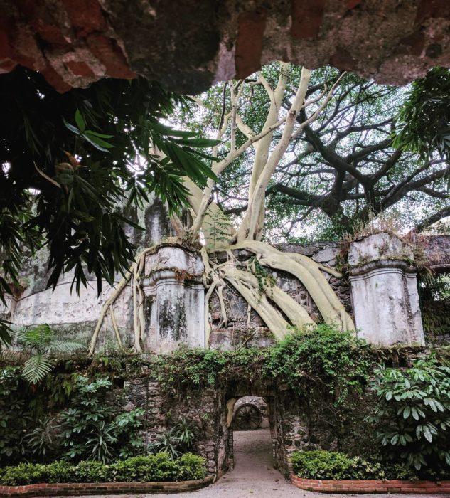 raíces de árbol envuelven a casa