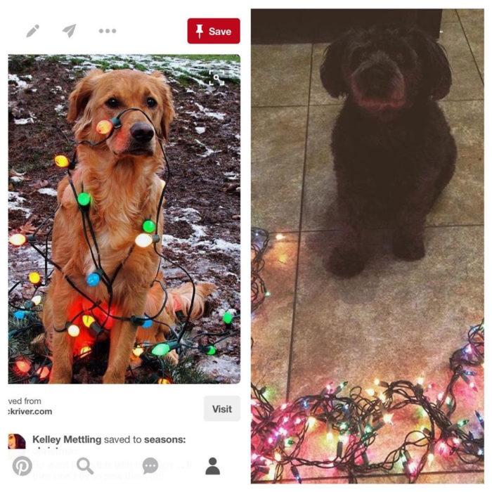 expectativa vs realidad tomar foto a perro con luces