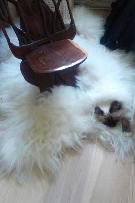 gato camuflado con alfombra