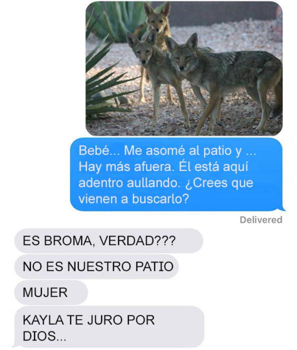 Mensaje de texto mujer bromea a su esposo - hay más coyotes afuera