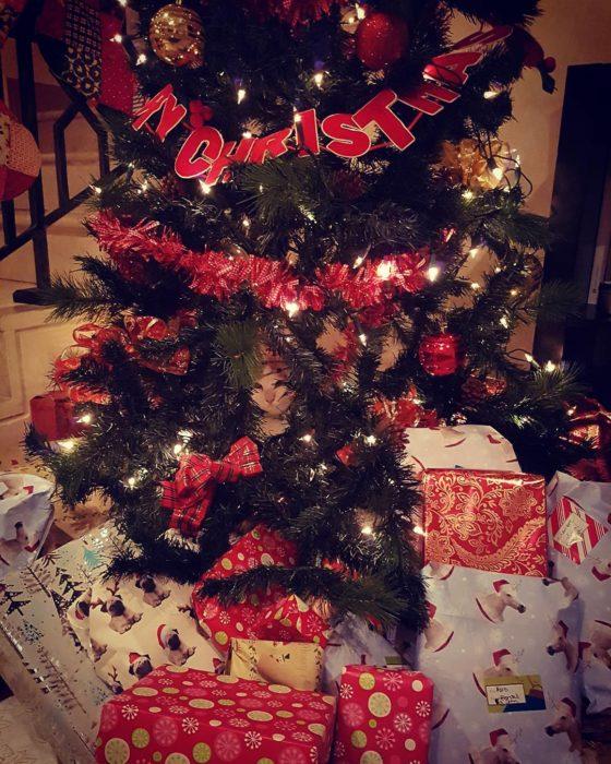 gato escondido en árbol de navidad
