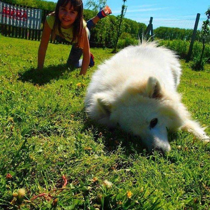 niña pequeña jugando con un perro blanco