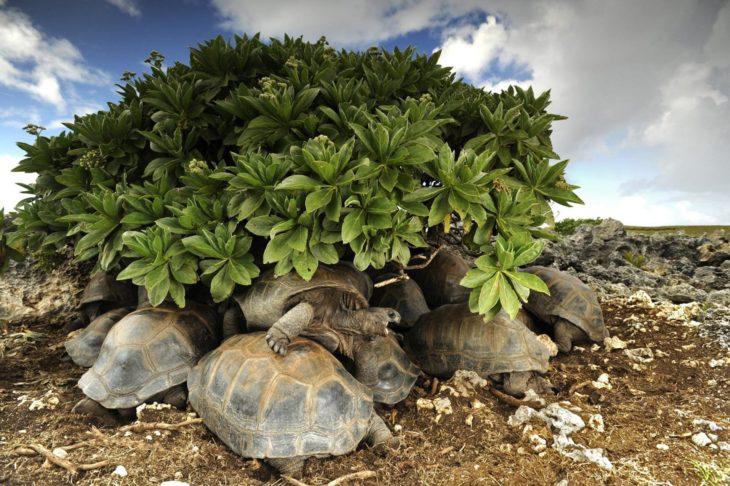 grupo de tortugas bajo unas ramas
