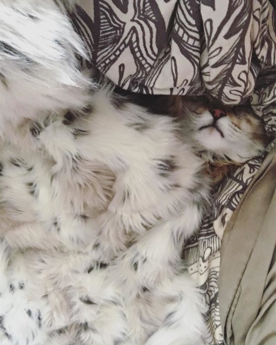 gato camuflado con cobija