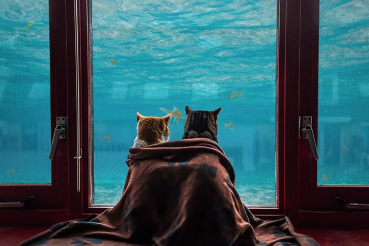 gatos mirando un estanque