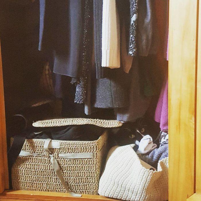 gato escondido en un ropero