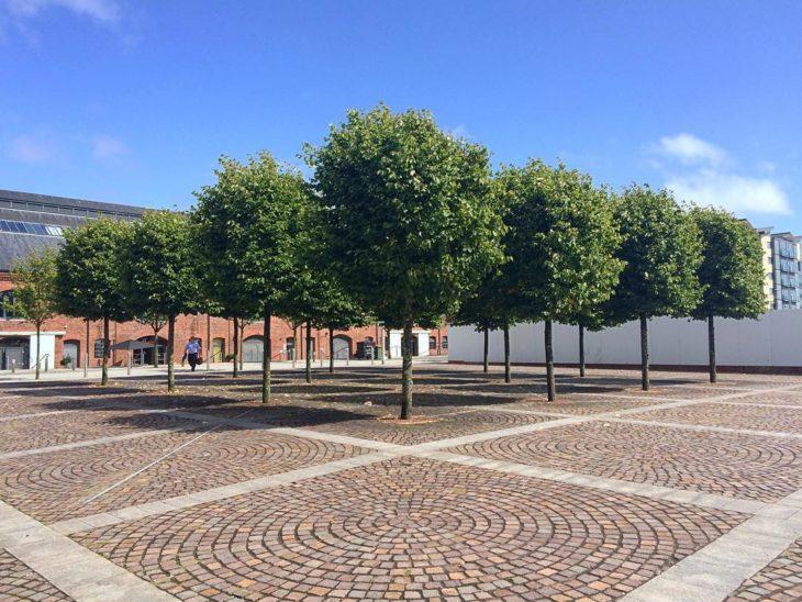 árboles en cuadrantes de piso