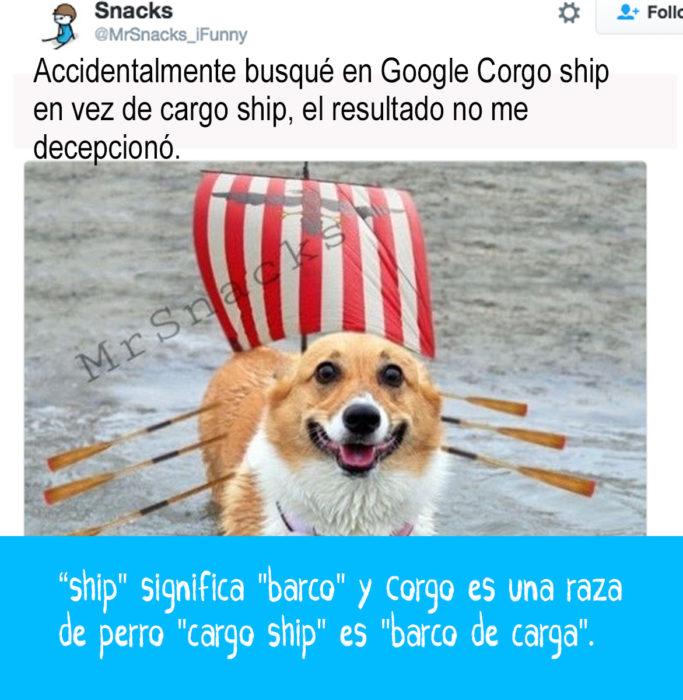 perrito en el mar con vela de barco