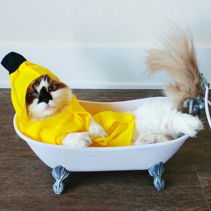 gato posando en la tina con traje de plátano