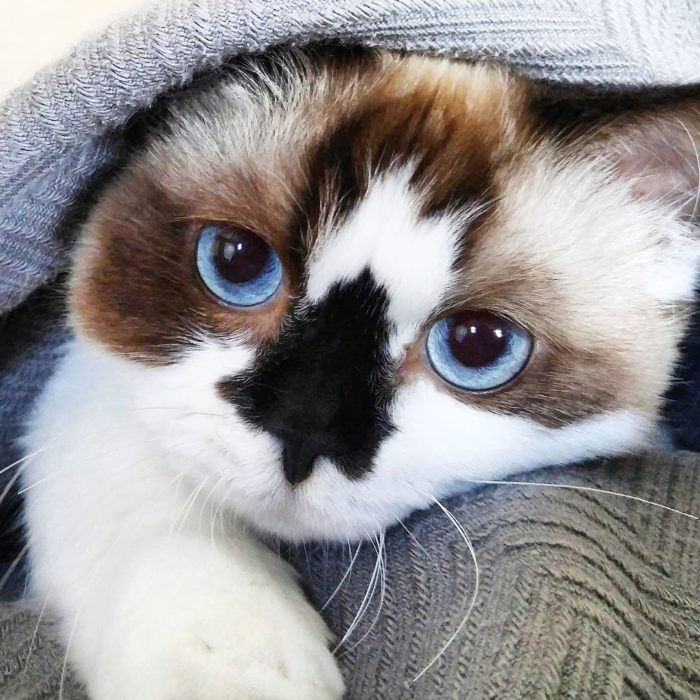 gato tierno