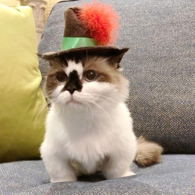 gatito tierno con sombrero