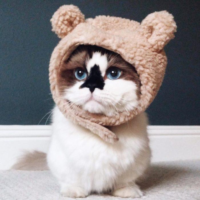gatito tierno con gorrito