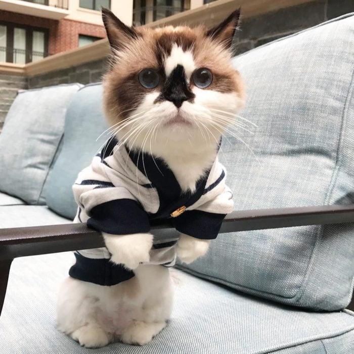 gato con una bata elegante