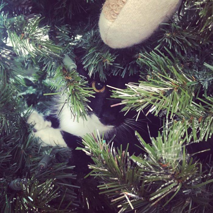 gato entre un árbol de navidad