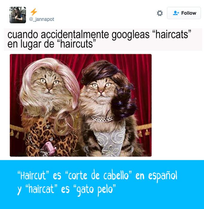 gatos con pelucas